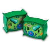 Soft Foam Cross-Section Plant Cell Model